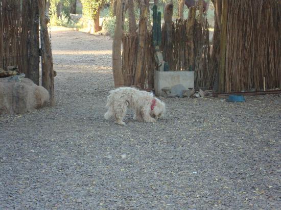 Hostal El Anexo: quintal, outro cão