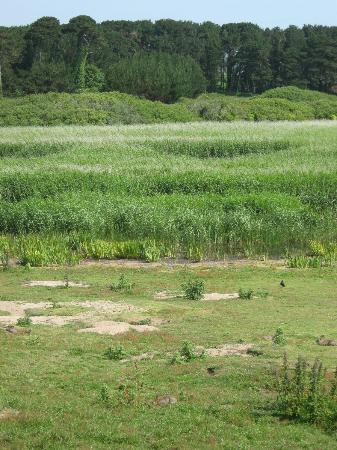 Marazion Marsh : the marsh in spring