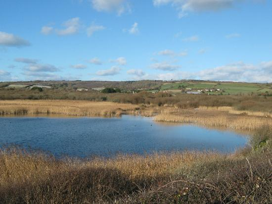 Marazion Marsh: a cold winter's day, just before christmas