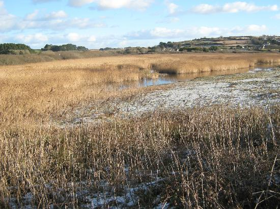 Marazion Marsh : the marsh under ice