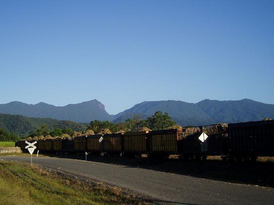 TreeHouse Retreat BnB: local cane train