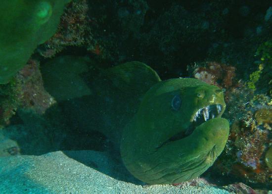 Mayan Divers: Grumpy Moral Eel