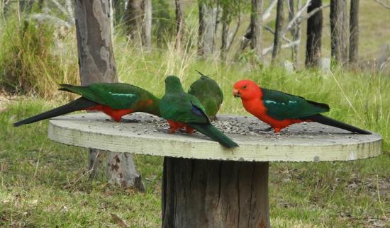 Ketchup's Bank Glamping: parrots