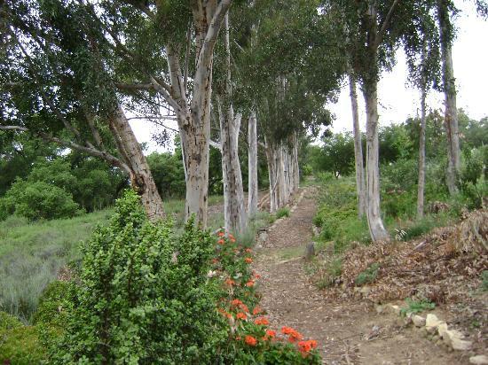 Ojai Retreat & Inn: Nature Path
