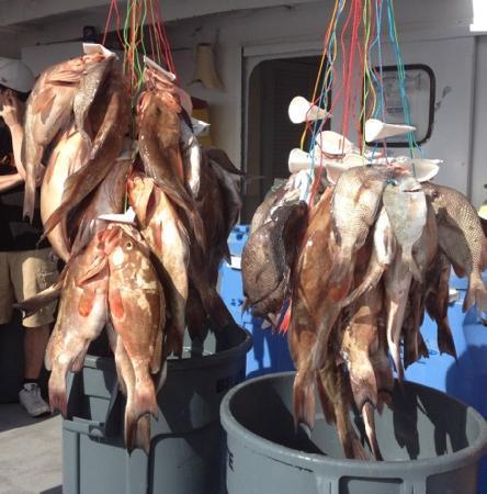 Queen Fleet Deep Sea Fishing: Fun day of fishing!