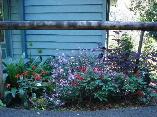 Montville Country Cabins: Cabin Garden.