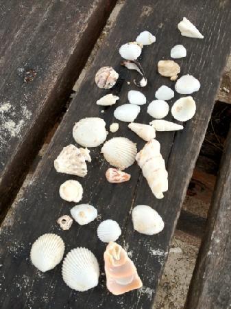 Mamutik Island: seashells