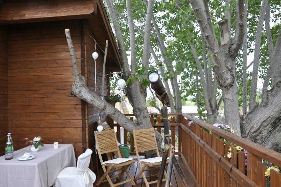 La favola della casa sull 39 albero foto di agriturismo for Planimetrie della casa sull albero