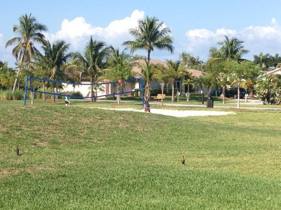 Mackle Park : Great volleyball area