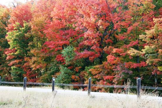 Algonquin Provincial Park: Highway 60 Fall Colour
