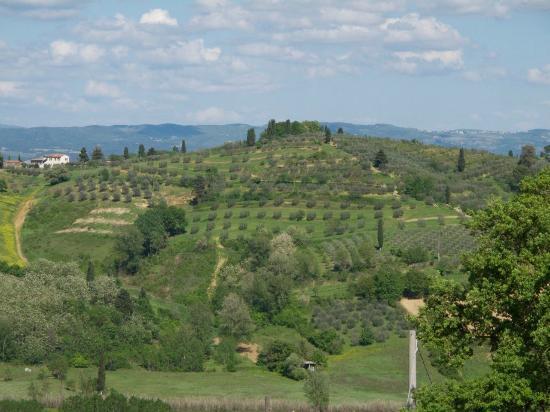 Agriturismo Il Casolare di Bucciano: Area