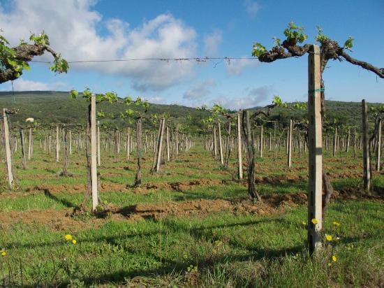 Agriturismo Il Casolare di Bucciano: field