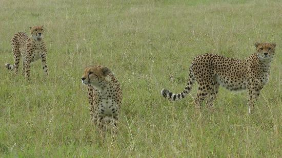 Royal Mara Safari Lodge: The 3 Brothers