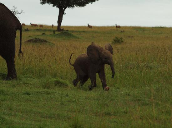 Royal Mara Safari Lodge: Cute baby Elephant