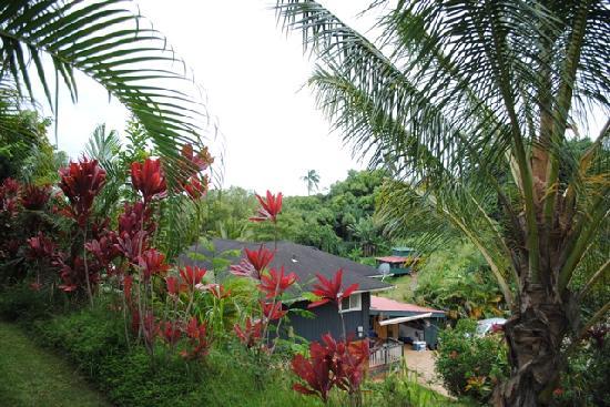 Kauai Banyan Inn: View of neighbors from the edge of the lanai.