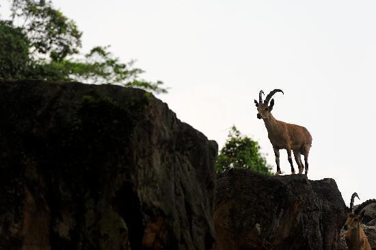 สวนสัตว์สิงคโปร์: Great environments for the animals