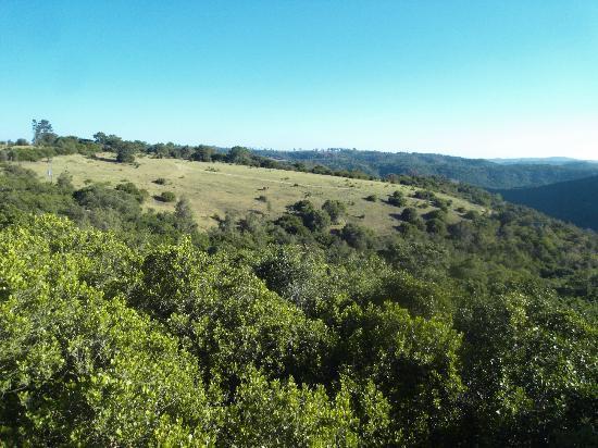 Teniqua Treetops: lovely views