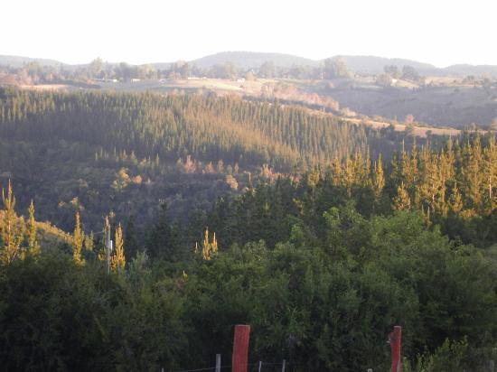 特尼夸樹梢生態小屋照片