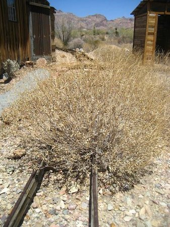 Castle Dome Mines Museum & Ghost Town: These tracks haven't been used in a LONG time!