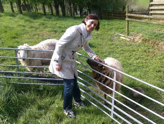 Penvith Barns: Friendly locals