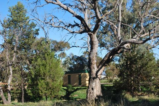 Stony Creek Bush Camp Caravan Park : Bunkhouse in the bush