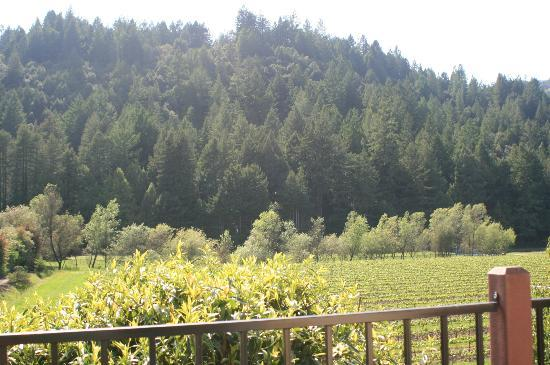 West Sonoma Inn & Spa: Backdrop of vineyard view