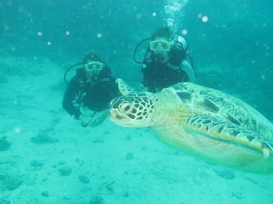 Big John Scuba: One of the many turtles we got to see.