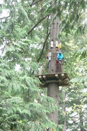 WildPlay Element Parks Nanaimo : That's pretty high up...