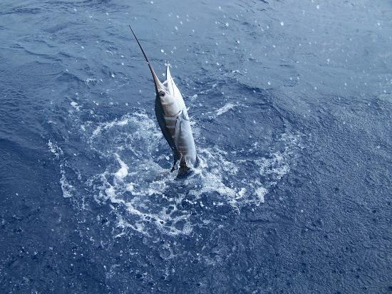 Sport Fishing Fiji: saily