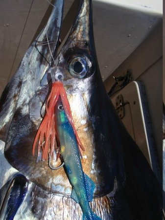 Sport Fishing Fiji: marline