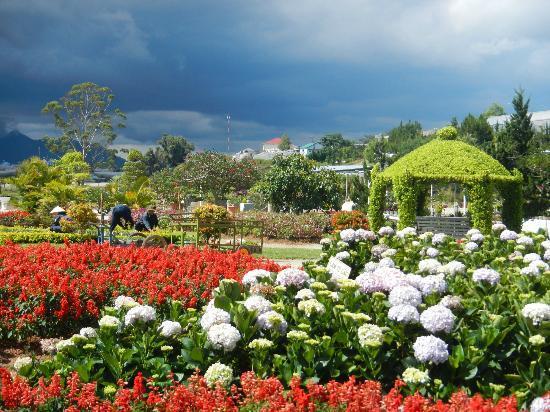 Dalat Flower Park : Some lovely flower displays