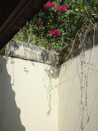 Villa Diana Bali: Open Bath