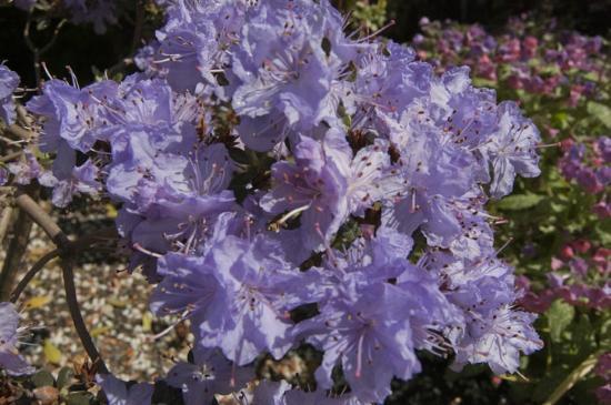 Evergreen Arboretum & Gardens: flowers