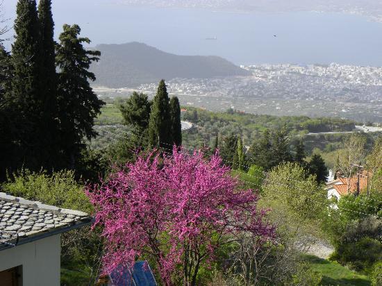 Xenia Palace: Βολος