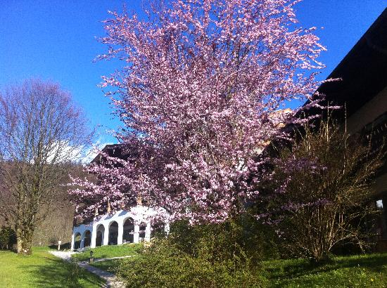 Berghotel Rehlegg: Frühling Rehlegg