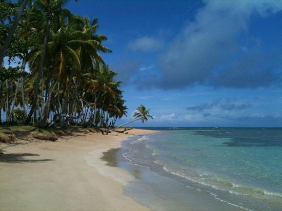 Hotel Alisei: Bonita beach