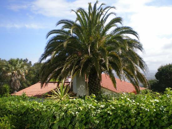 Quinta Colina Flora: Quinta