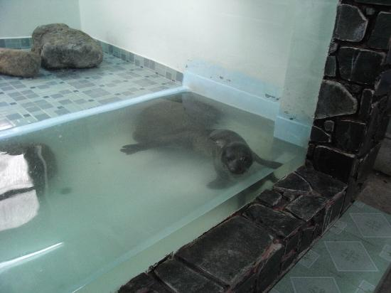 National Oceanographic Museum of Vietnam: Seal 'enclosure""