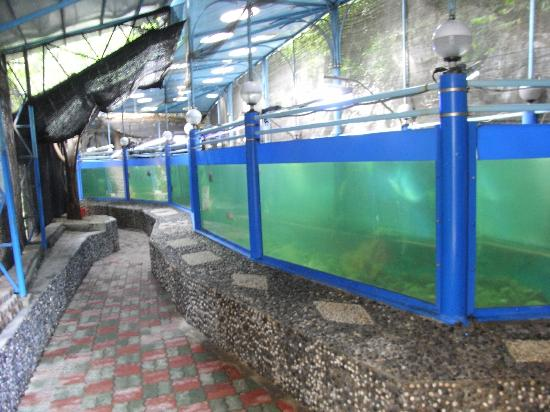 National Oceanographic Museum of Vietnam: Large fish tank.