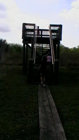 ‪‪Paleo Hammock Preserve‬: outlook‬