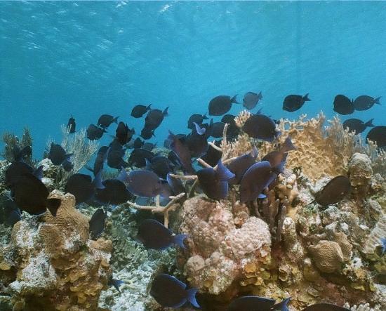 Playa Coral