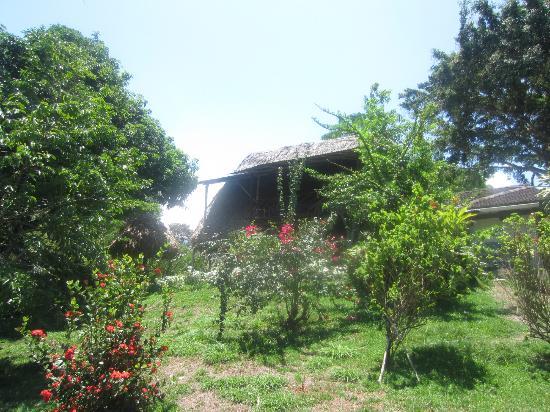 Diquis Del Sur : Dans le jardin