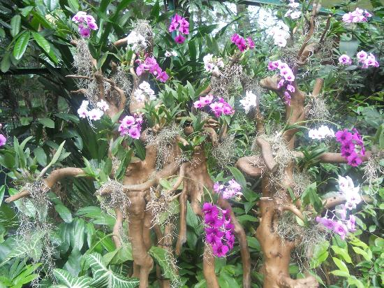 National Orchid Garden: Small Cute Orchids