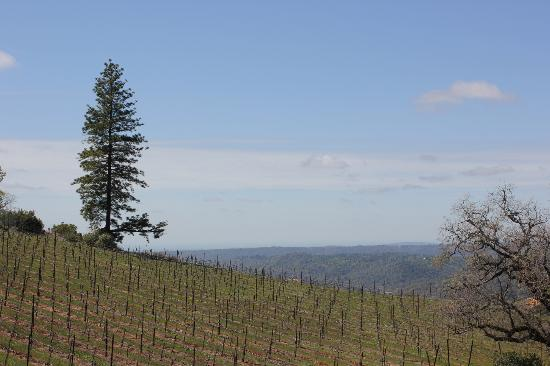 Mount Aukum Winery: View to the Sacramento Valley