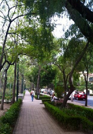 Polanco's Lincoln Park