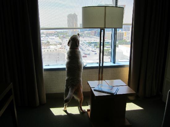 The Westin Las Vegas Hotel, Casino & Spa: enjoying another beautiful day in Vegas