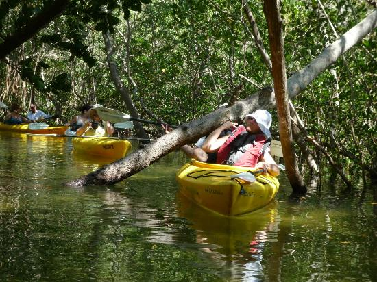 Adventure Kayak Outfitters: Low branches made the ride fun without danger.