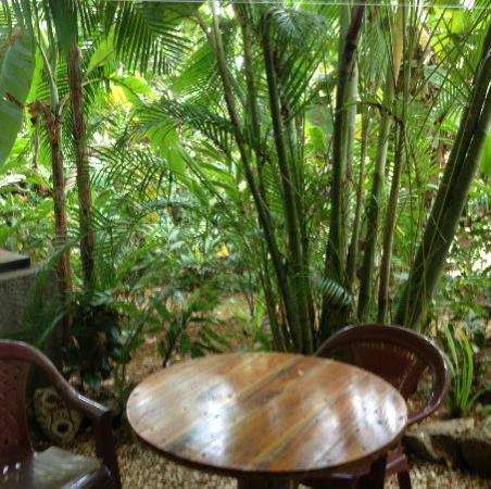 Hotel Buenisimo: Outside our Garden Room