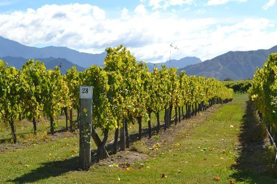 La Veranda: vineyard with mountains