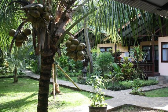The Village Bunaken: rooms
